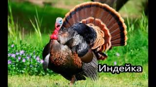 Обучающие видео для детей домашние животные, животные в деревне (со звуками)