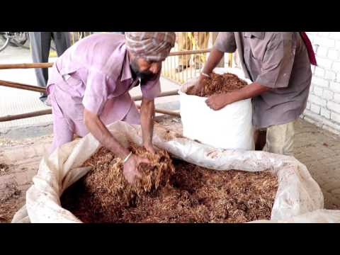 Utilization of kinnow waste as livestock feed