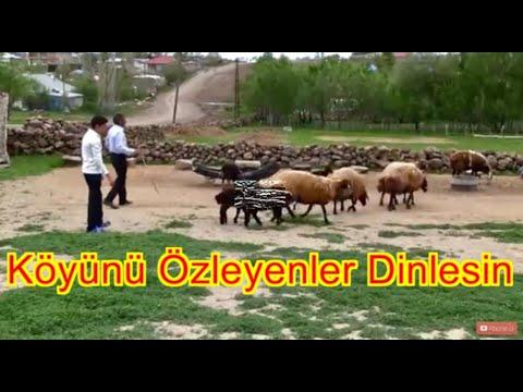 Ozan Dündar - AĞLADIM (Official Video)