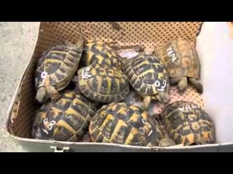 Abbandonate tartarughe di terra youtube for Tartarughe di terra prezzo basso