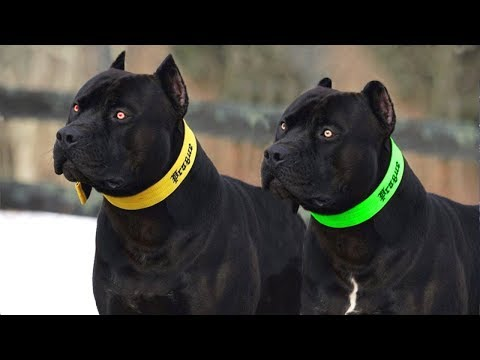 10 MOST SUPREME DOG BREEDS