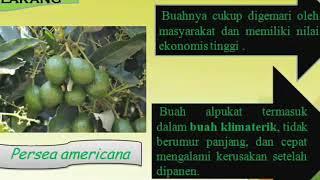Hasil Pemasakan Buah Alpukat (Persea americana) Dengan Berbagai Perlakuan