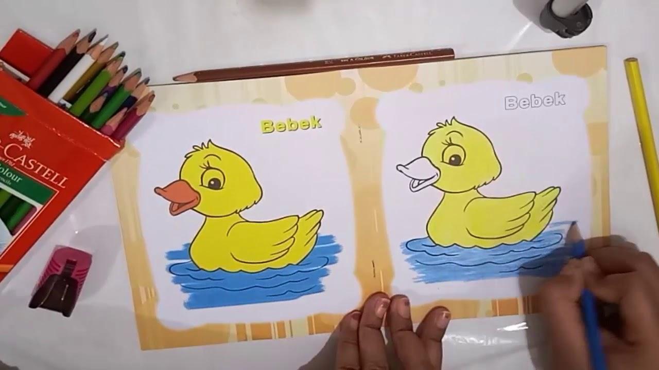 Mewarnai Gambar Hewan Bebek