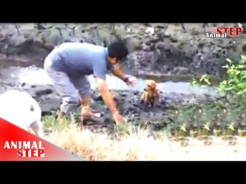 Puppy Stuck in Mud and Injured Because Hit by a Car