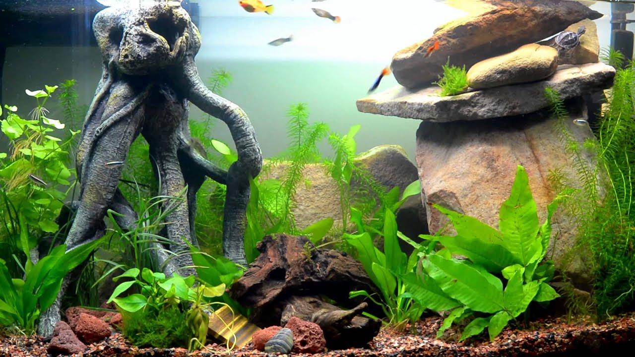 Aquatic Turtle Tank - YouTube