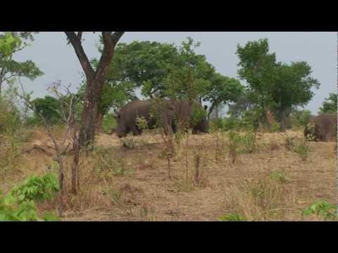 Zambia Mosio tunya National Park-Victoria Falls-Livingstone-Zambia Zuidelijk Afrika deel 19