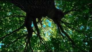 Ludovico Einaudi - Underwood - In A Time Lapse (Piano Solo)