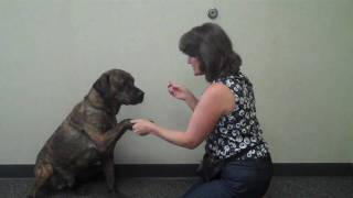 "Teaching Your Dog To ""give Paw"""