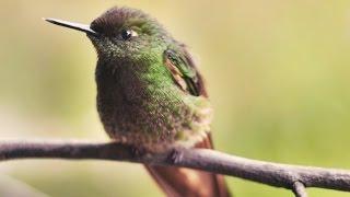 birds-music: les oiseaux