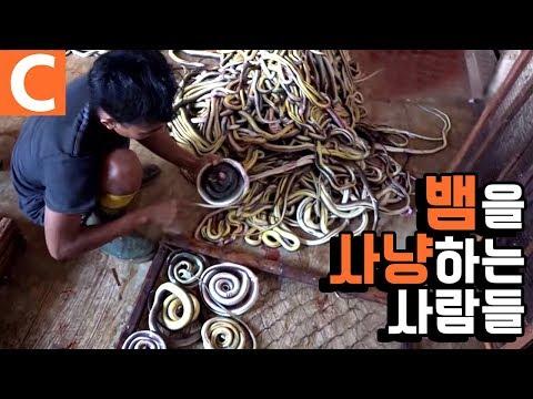 해외 극한직업! 인도네시아 땅꾼의 '뱀' 사냥