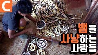 해외 극한직업! 인도네시아 땅꾼의