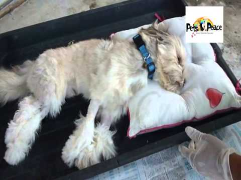 Iori Pets in Peace Malaysia dog cremation cemetery funeral memorial burial bury services