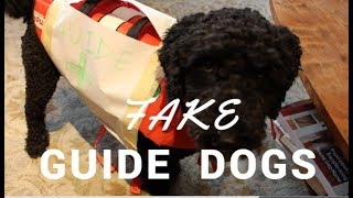 Fake Guide Dogs