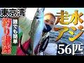【アジ釣り】走水ブランド大アジを釣って食べて思う存分堪能する!!【黄金アジ】【走水アジ】【釣りガール】【関義丸】