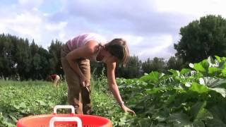 VIDEO: Farm Internships