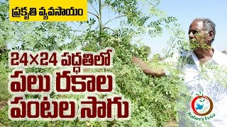 Zero Budget Natural Farming | Growing Variety of Crops in 24 X 24 method