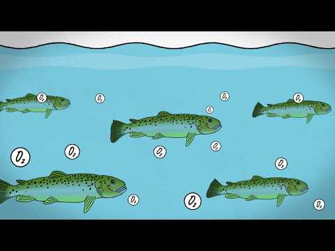 Fish Farming Methods