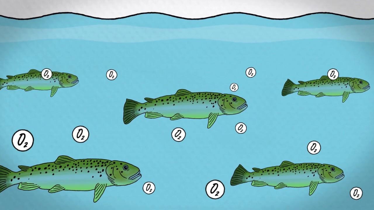 Fish farming methods - YouTube