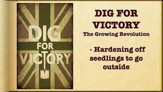 The Art of Hardening off plants / How to harden off plants / Planting out vegetables / Growing food
