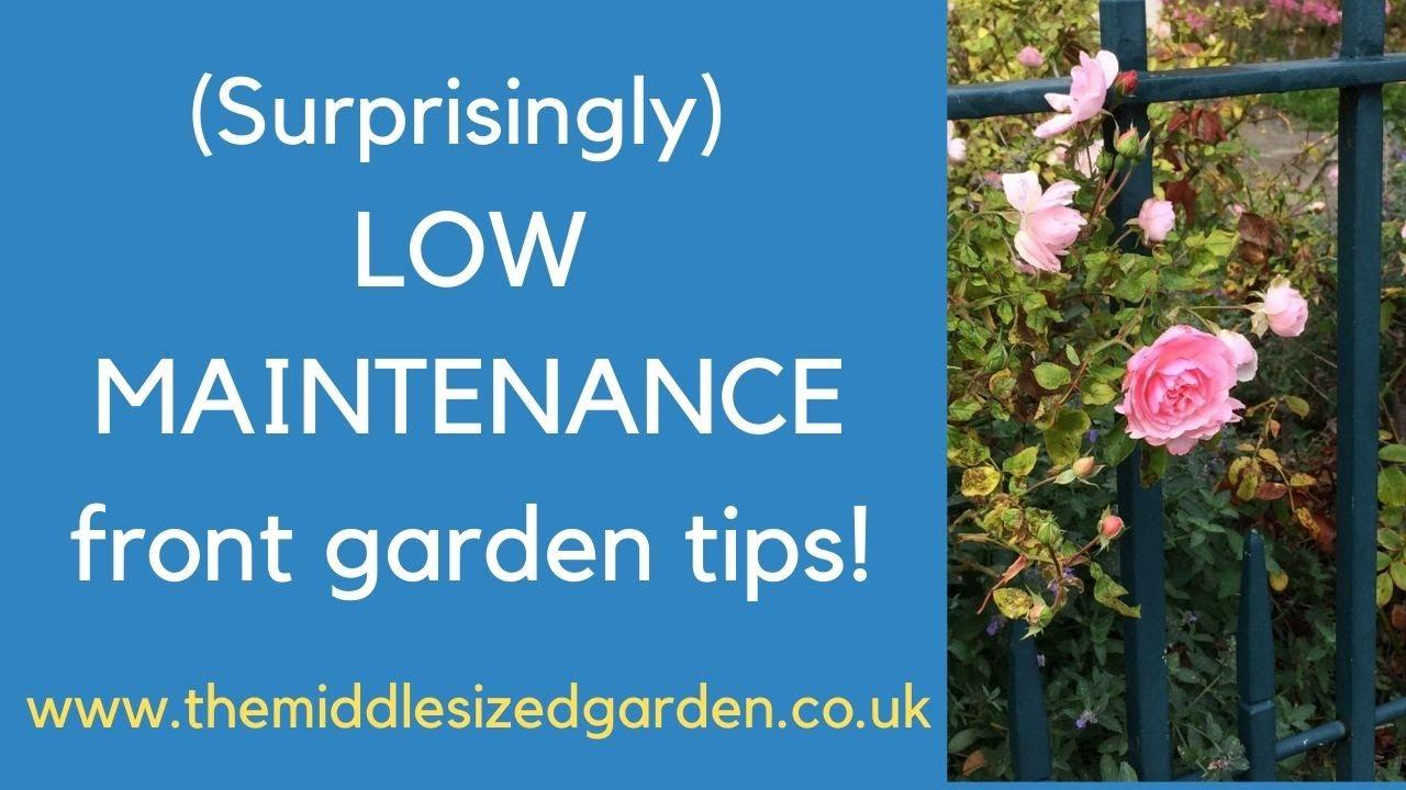 Best Low Maintenance Front Garden Tips Youtube,Blouse Back Neck Designs Blouse Designs 2020 Latest Images