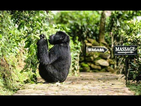 Bwindi Lodge | Gorilla Trekking