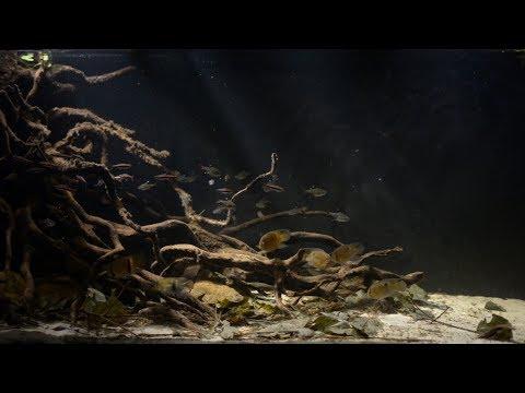 #BADC2018 / Lokoti kiki creek, Suriname, 350 L