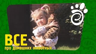 Кошки И Дети. Все О Домашних Животных