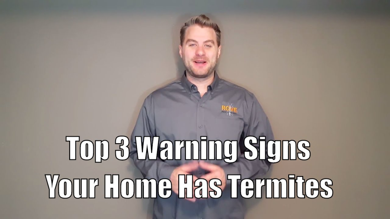 Top 3 Warning Signs Your Home Has Termites