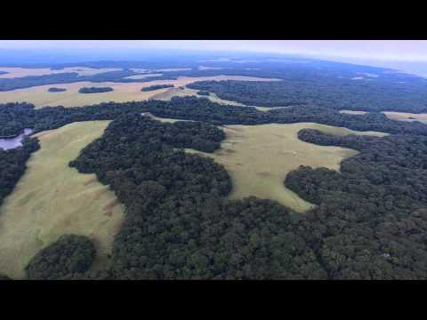 The hidden lake forest of Gabon