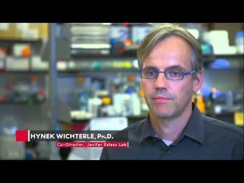 The Project A.L.S./Jenifer Estess Laboratory for Stem cell Research