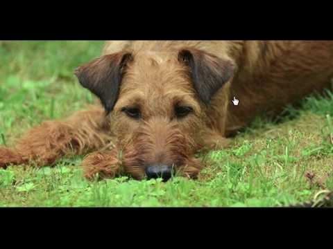 Will pets go to Heaven?  'Tim, An Irish Terrier'  by  Winifred M Letts
