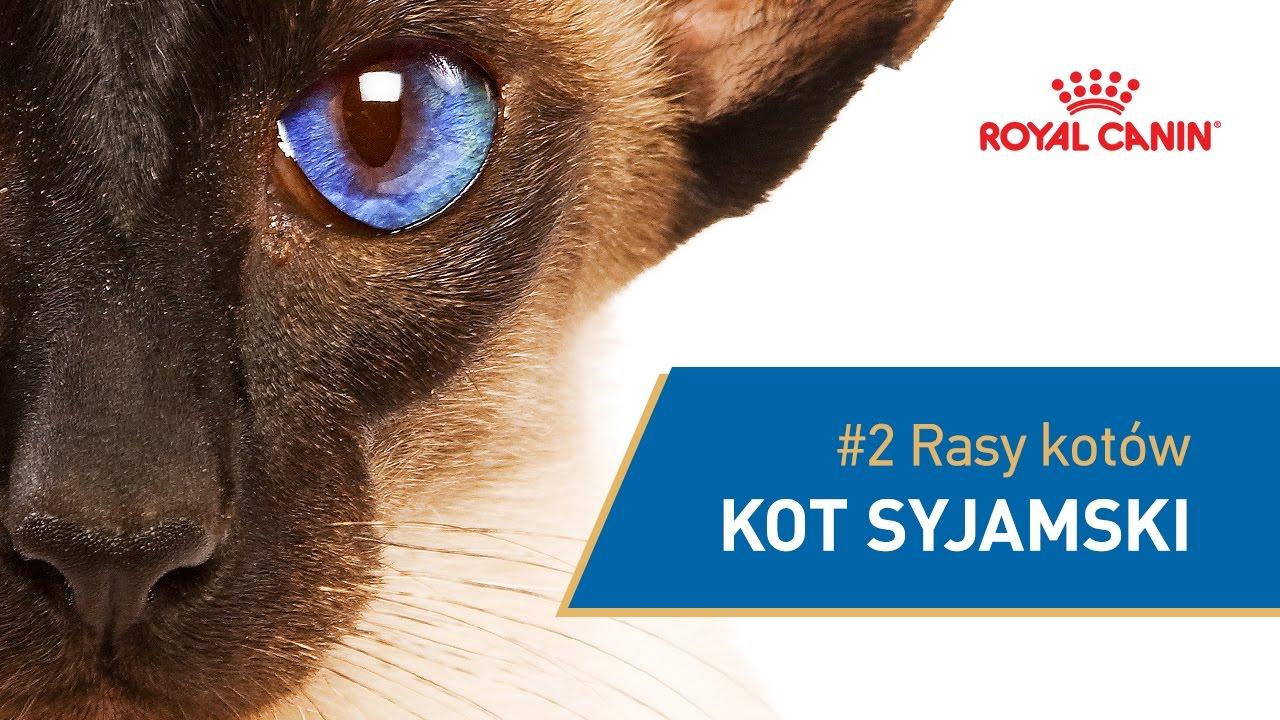 2 Rasy Kotów Kot Syjamski Royal Canin Youtube