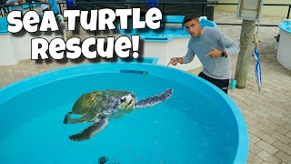 rescuing-injured-sea-turtles-crazy