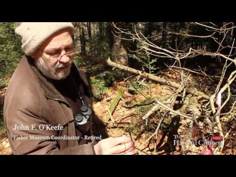 If A Tree Falls: The Sights, Sounds, and Studies at the Harvard Forest