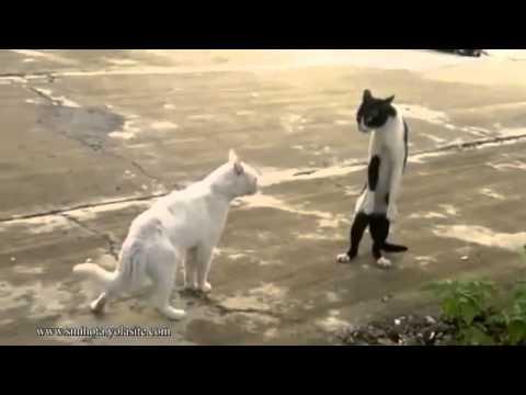 Dog Cat In Rain