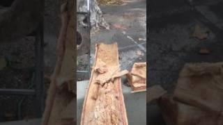 deux platanes dangereux mis en sécurité à aix