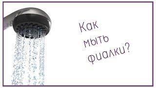 Как мыть фиалки?(Существует такой миф, что фиалки мыть нельзя. Конечно же это не так, просто есть несколько нюансов, о которых..., 2013-11-03T19:43:49.000Z)