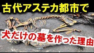 古代アステカ首都で犬だけの墓の遺跡を発見メキシコ考古学者発掘チーム ...
