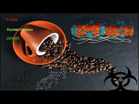 Влияние кофе на уровень холестерина и липопротеинов низкой плотности (ЛПНП).
