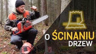 Jak ściąć drzewo - o Lesie #32