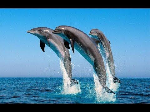 Виды Дельфинов фото и описание