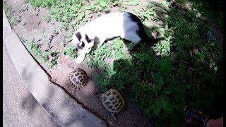 Смешное видео про кошек  Реакция котят на черепаху