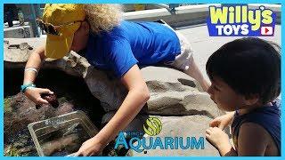 Birch Aquarium at Scripps UCSD San Diego - Sharks FISH JellyFish STAR FISH Toy Boats WILLY