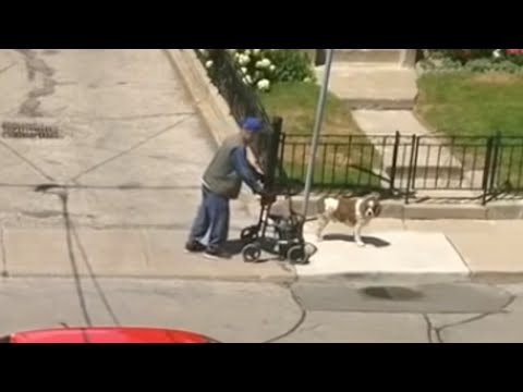 Off-leash dog patiently awaits elderly owner during walk