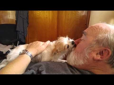 Gizmo loves daddy