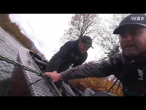 Skykomish River Chum Collection With WDFW