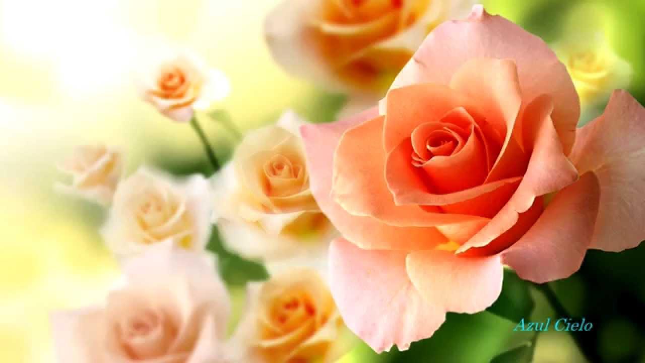 Wall Paper Wide Pink Rose Colours Soft Nature Flower: Imágenes De Flores.