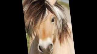 Er staat een paard in de gang (stopmotion)