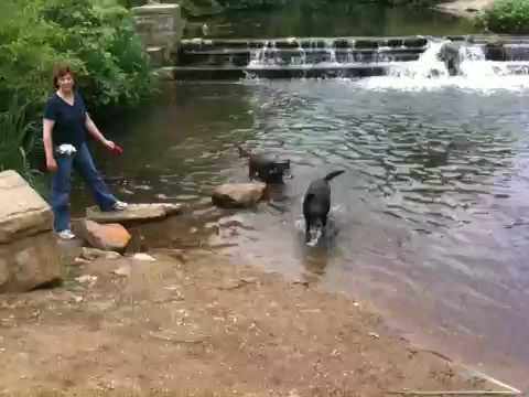 MayI and Kira swimming
