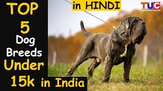 Top 5 DOGS Under 15k in India : In HINDI : TUC